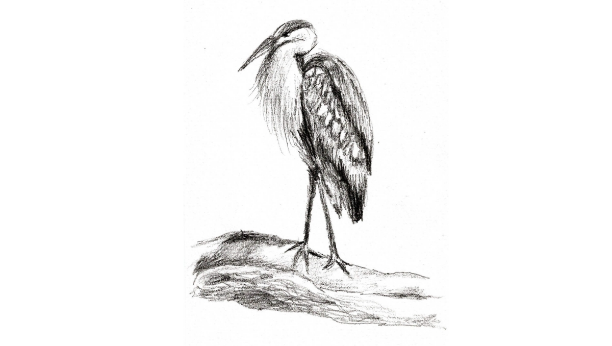 Dessins-Heron1-2017
