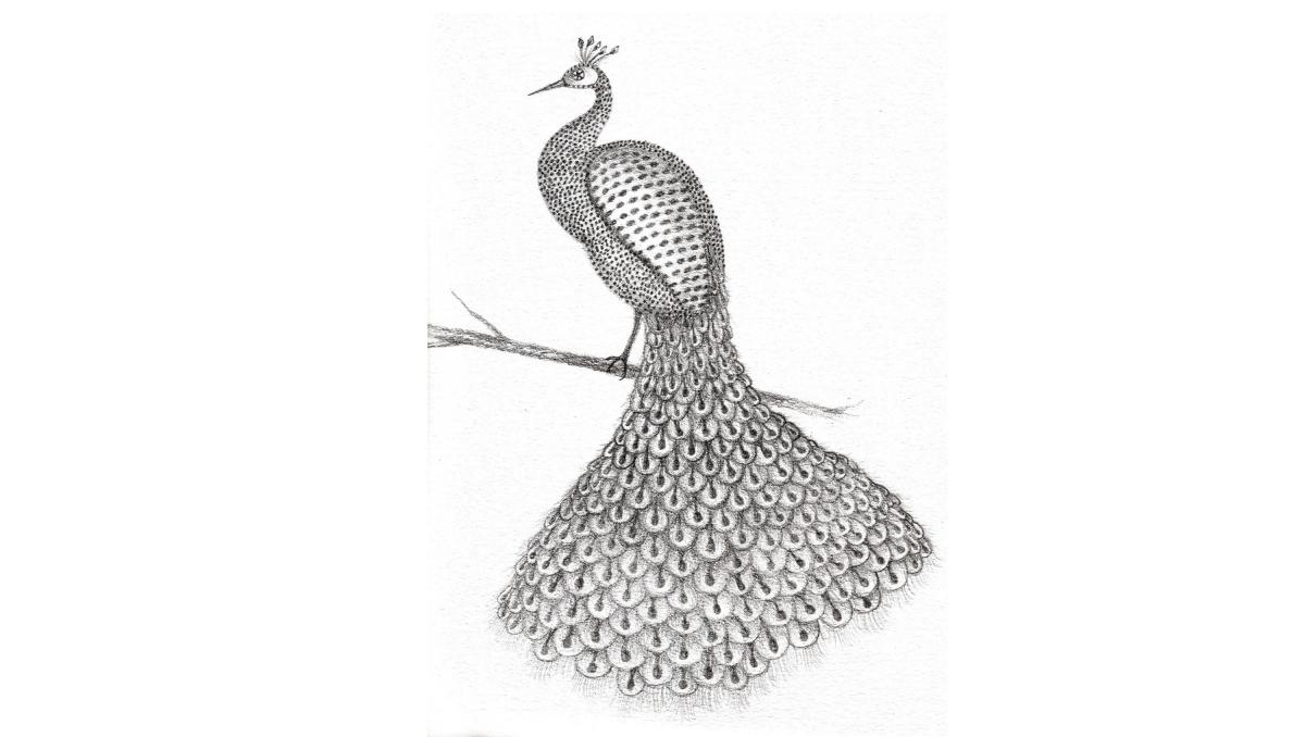 Dessins-Peacock2-2017